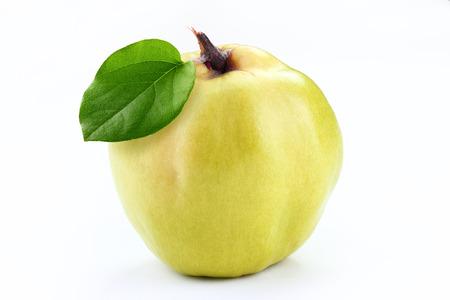 membrillo: quince with leaf Foto de archivo