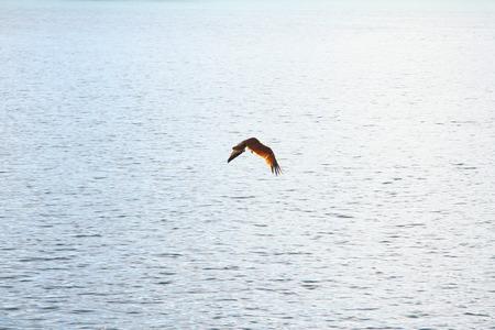 aim: Hunter in the Sky