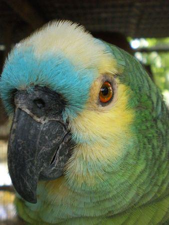 Parrot Stock Photo - 2990261