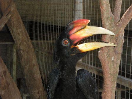 Bird Stock Photo - 2990119