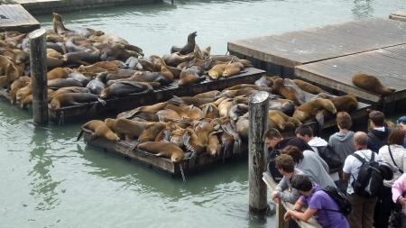 De zegels van Fishermans Wharf
