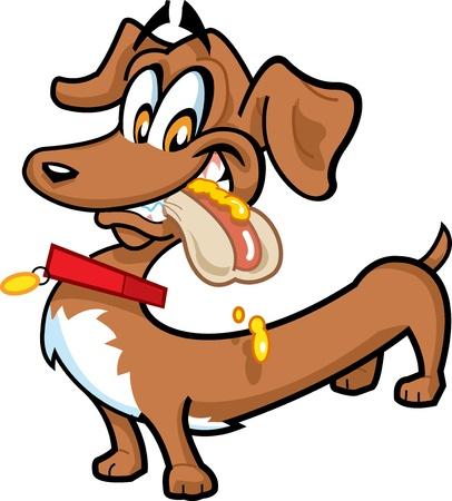 caliente: Dachshund feliz con un perrito caliente en la boca