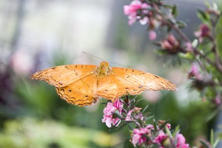 orange moth on a pink flower Reklamní fotografie