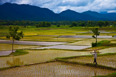 green economy: Upcountry field of Thailand