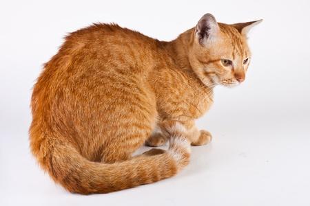 grey tabby: Cat6 Stock Photo