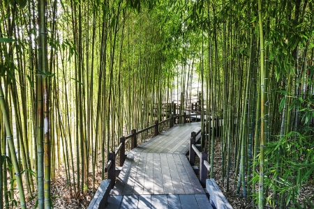 A Bamboo Garden with a Wooden Walkway Stock Photo