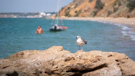 Portrait of a sea bird on a stone.