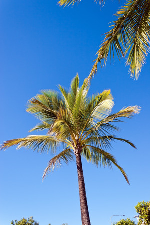 Palm trees in the blue sky photo