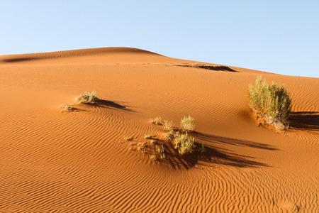 namib: Ripple mark in the Namib Desert