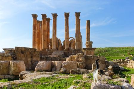 greco roman  roman: Cat walking on Roman ruins, Jerash Stock Photo