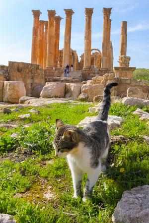 Katze, die auf römischen Ruinen, Jerash Standard-Bild - 34921873