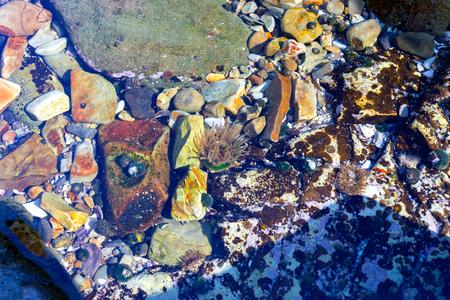 Seeanemone und Muscheln im Pazifischen Ozean Standard-Bild - 44704362