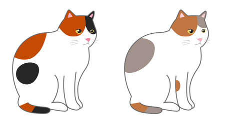 Calico cat in a sitting. Vector illustration isolated on white background.