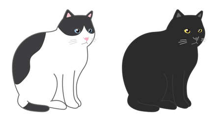 Black cat and black and white cat in a sitting. Vector illustration isolated on white background.