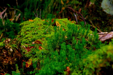 Moss in the wildlife Stock Photo