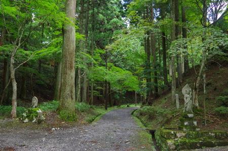 Heilige Schritte im Shinto-Schrein