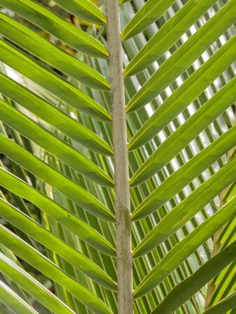 Palm leaf, Fond Doux Holiday Plantation, Saint Lucia