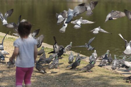 Girl chasing pigeons, Osterley Park, Isleworth, Middlesex, England Stock Photo