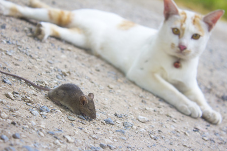 a cat with a rat