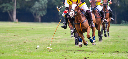 Polo horse player riding a horse to hit a ball in game.