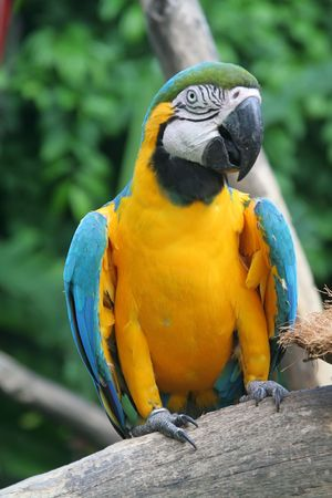 Parrot talking its mouth off in a park photo
