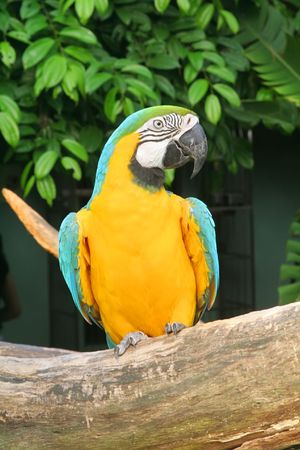 squawk: Parrot in a cute and funny pose