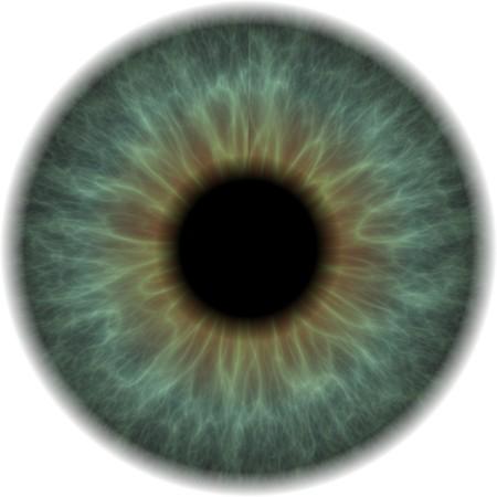 globo ocular: Eyeball Clip Art aislados sobre un fondo blanco