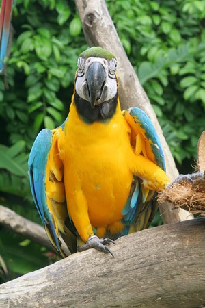 Parrot in a cute and funny pose Stock Photo - 4513725