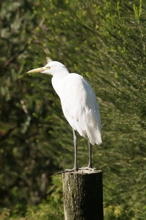 birdwatching: Stork Standing on a Boat Pier Log Stock Photo