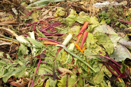 decompose: Compost Heap Made of Unused Vegetables in Recycle