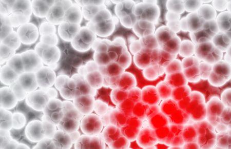 globulos blancos: Gl�bulos rojos y blancos de crecimiento de alerta Foto de archivo