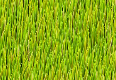 Green Grass Patch Abstract Background Pattern Texture Stock Photo - 5985667
