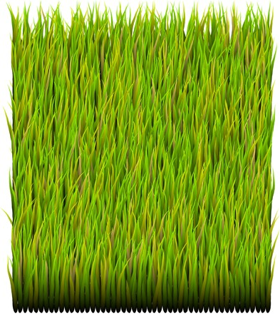 Green Grass Patch Abstract Background Pattern Texture