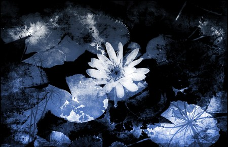 innocence: Innocence in Nature Painted Flowers Art Abstract Stock Photo