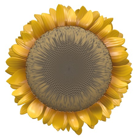 Sunflower Clip Art Isolated on a White Background Stock Photo - 7287219