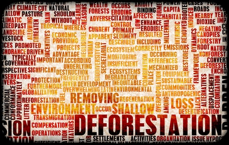 deforestacion: Concepto de da�os de p�rdida de la deforestaci�n de bosques como arte
