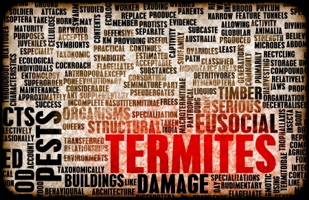 damage control: Termites Concept as a Pest Control Problem