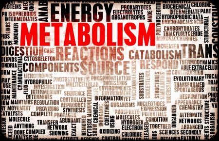 metabolism: Metabolism as a Medical Health Exercise Concept Stock Photo