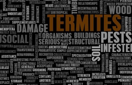 Termiten-Konzept als eine Pest Control Problem