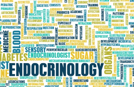 Endokrinologie oder endokrine System als Konzept