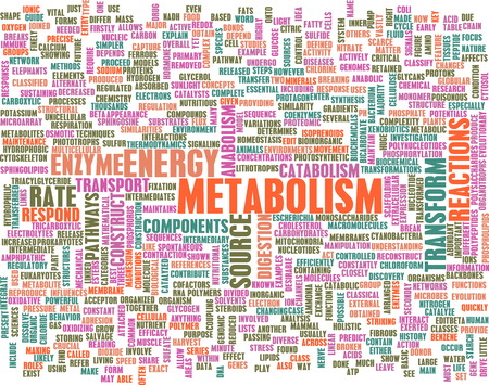 enzymes: Metabolism as a Medical Health Exercise Concept Stock Photo