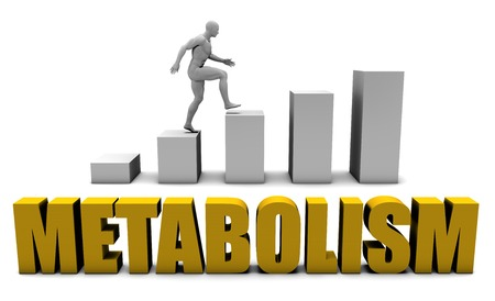 metabolism: Increase Your Metabolism  or Business Process as Concept