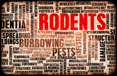 damage control: Rodents Concept as a Pest Control Problem