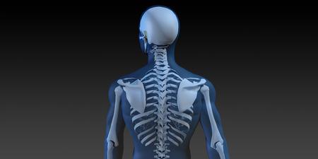 huesos: Ilustración Médica del cuerpo humano y huesos como arte