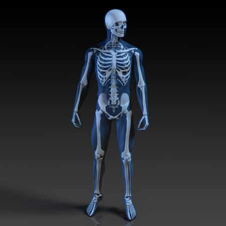 huesos humanos: Cuerpo humano y esqueleto Anatomía de la radiografía Concept Foto de archivo