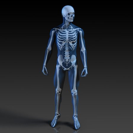 the human body: Human Body and Skeleton Anatomy Xray Concept