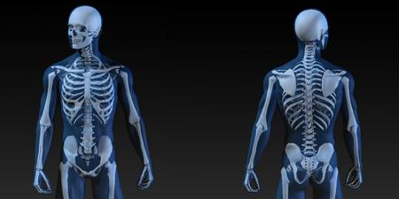 Illustration médicale du corps humain et Bones comme Art Banque d'images