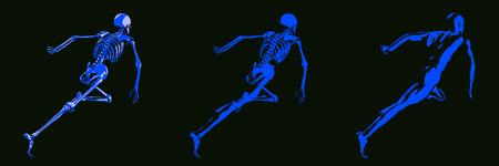 chest x ray: Human Body and Skeleton Anatomy Xray Concept