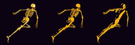 body damage: Human Bone Structure Diagram in Orange and Black