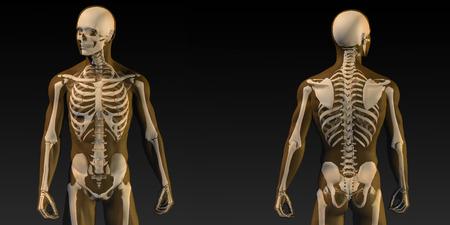 huesos humanos: Anatomía humana con Visible Arte Esqueleto y músculos Foto de archivo